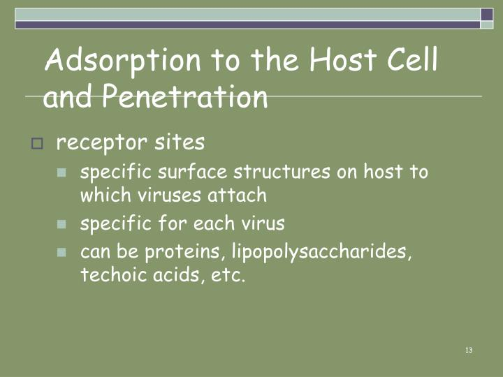 Adsorption to the Host Cell and Penetration