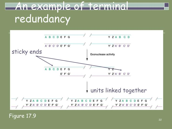 An example of terminal redundancy