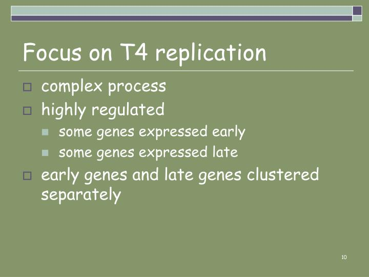 Focus on T4 replication