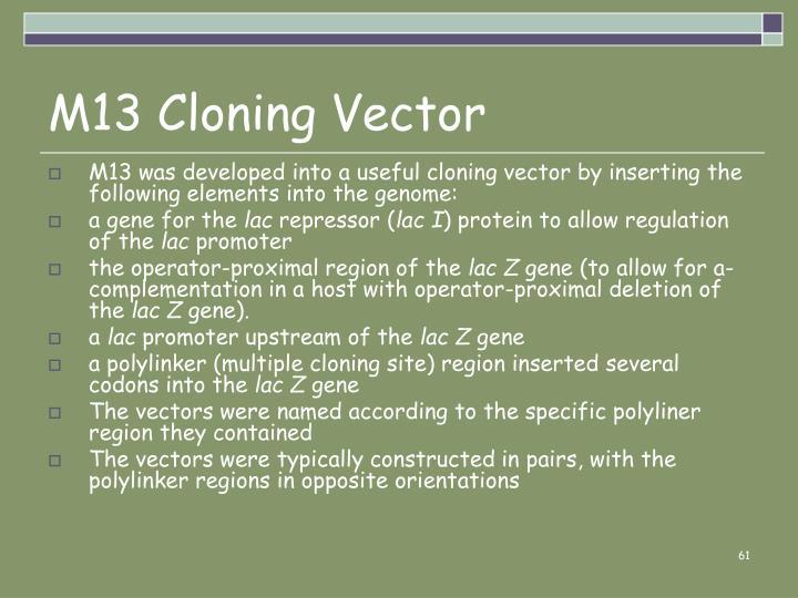 M13 Cloning Vector