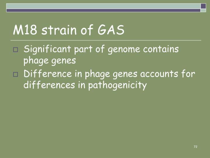 M18 strain of GAS