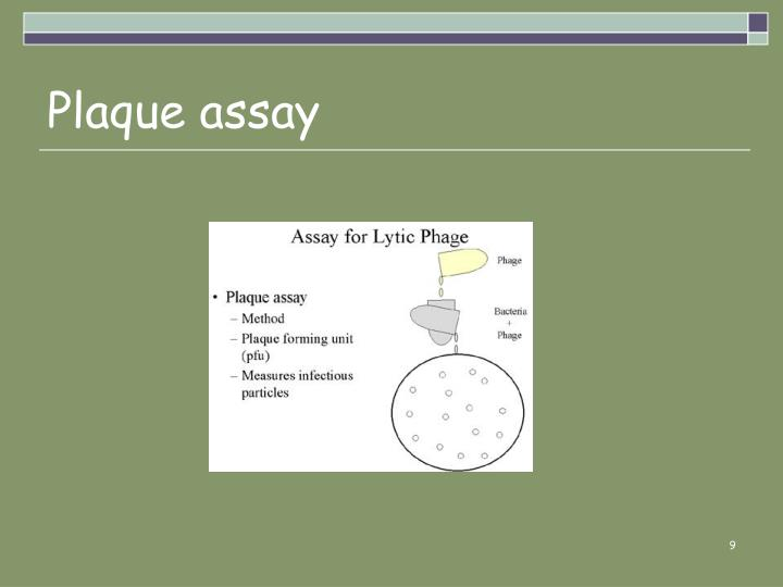 Plaque assay
