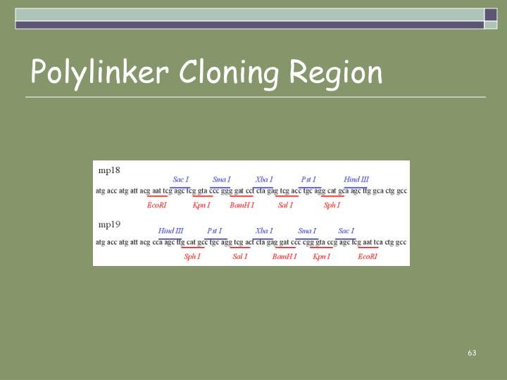 Polylinker Cloning Region