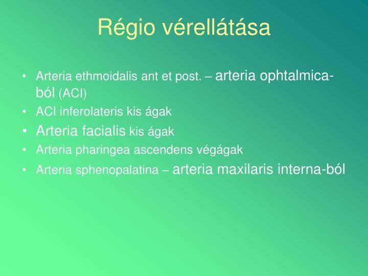 Arteria ethmoidalis ant et post. –