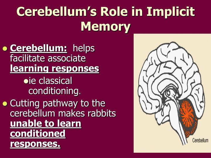 Cerebellum's Role in Implicit Memory