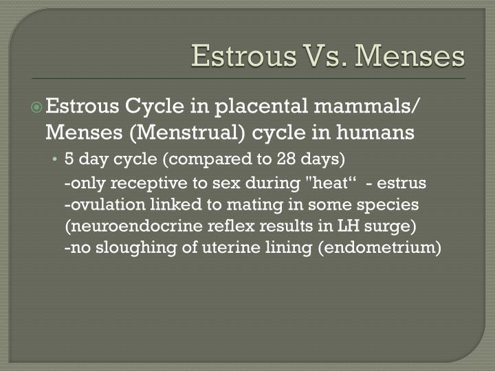 Estrous