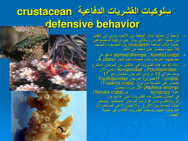 Crustacean defensive behavior
