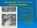 damsel fish defensive behavior
