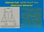 damsel fish defensive behavior4