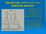 damsel fish defensive behavior5