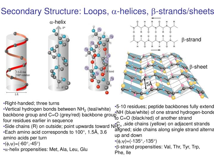 Secondary Structure: Loops,