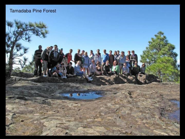 Tamadaba Pine Forest
