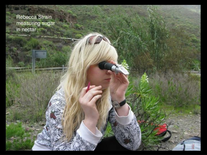 Rebecca Strain measuring sugar in nectar