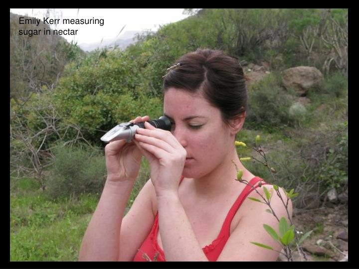 Emily Kerr measuring sugar in nectar