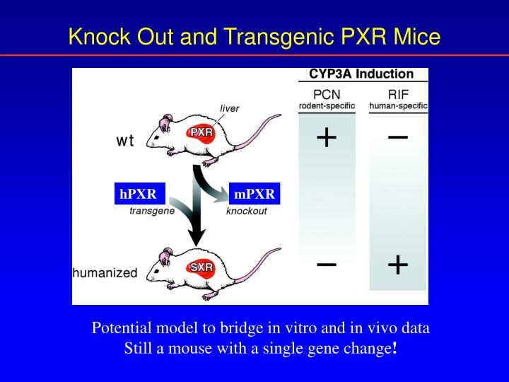 Knock Out and Transgenic PXR Mice