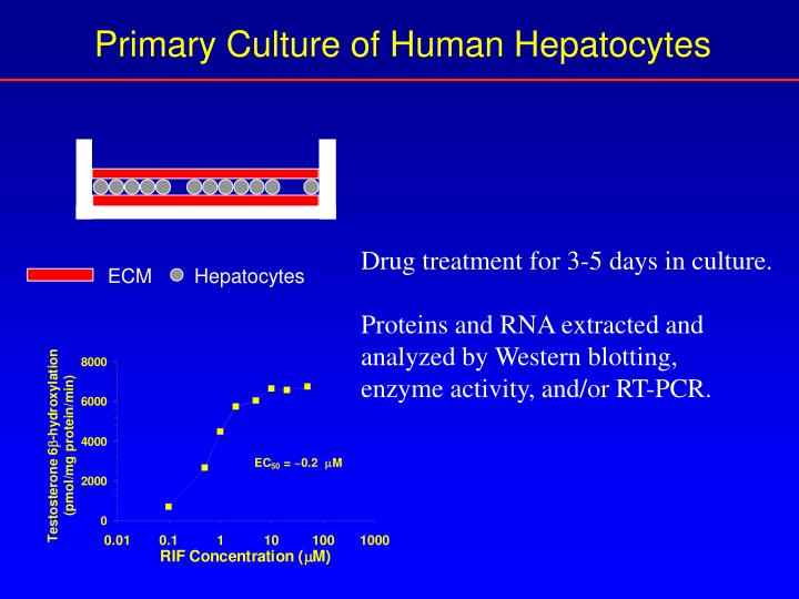Primary Culture of Human Hepatocytes