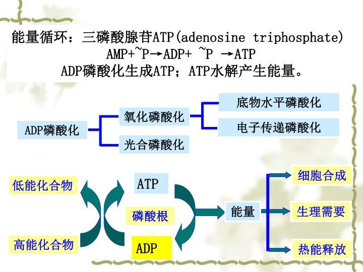 底物水平磷酸化