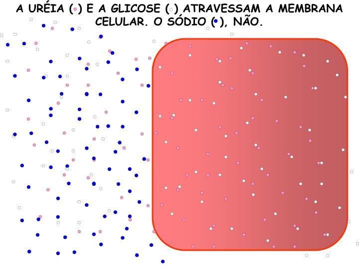 A URÉIA ( ) E A GLICOSE ( ) ATRAVESSAM A MEMBRANA CELULAR. O SÓDIO ( ), NÃO.