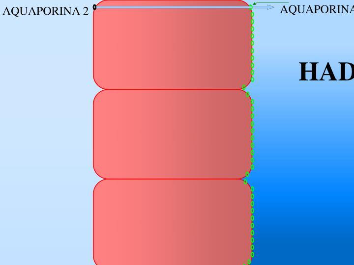 AQUAPORINA 3