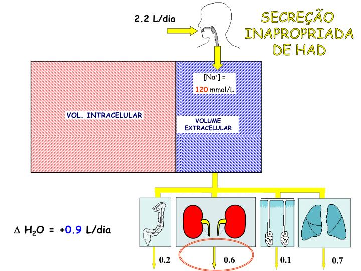 SECREÇÃO