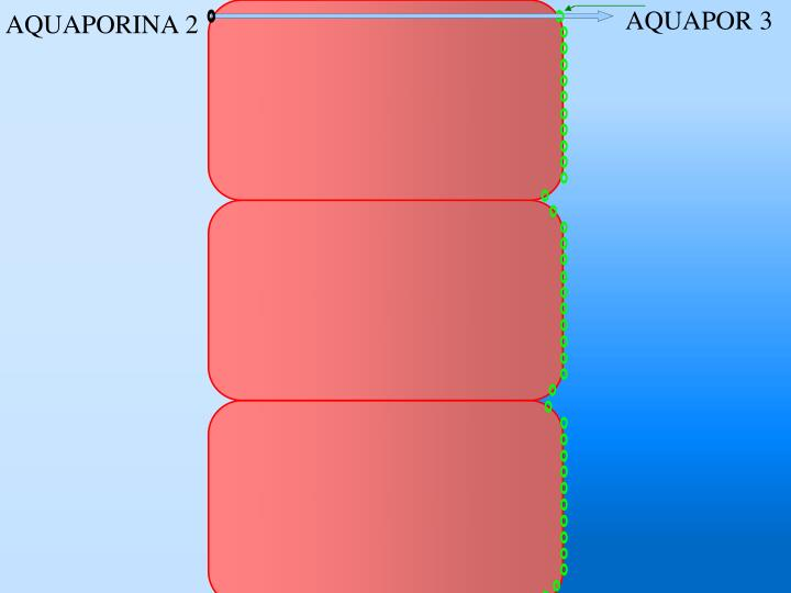 AQUAPOR 3