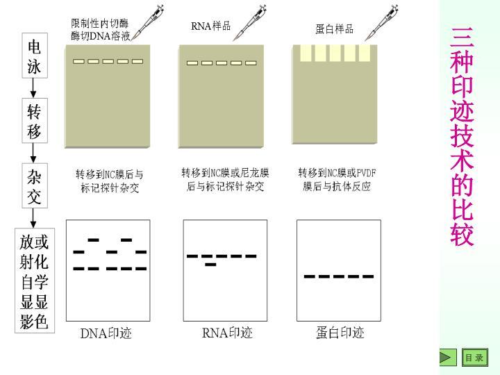 三种印迹技术的比较