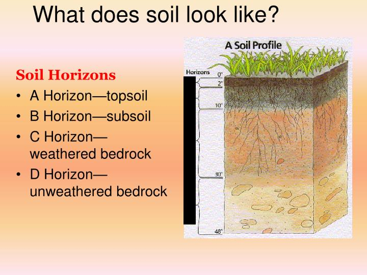 What does soil look like?