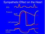 sympathetic effect on the heart