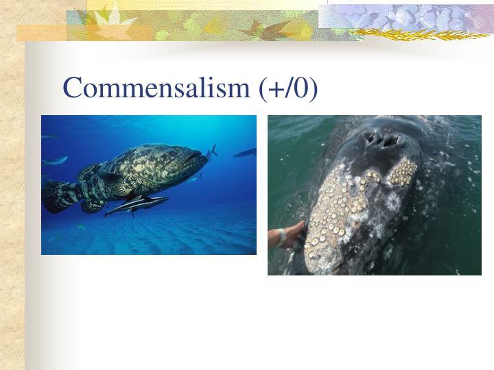 Commensalism (+/0)