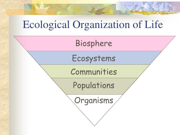 Ecological Organization of Life