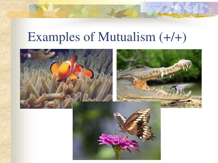 Examples of Mutualism (+/+)