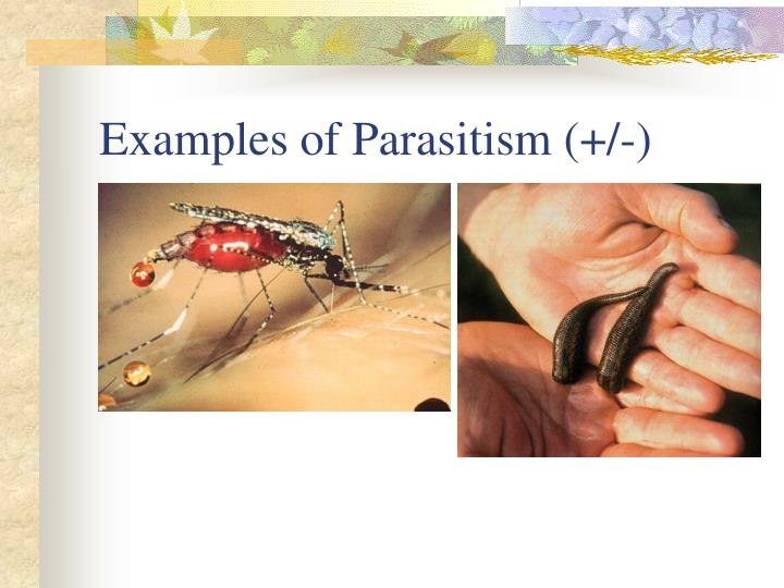 Examples of Parasitism (+/-)