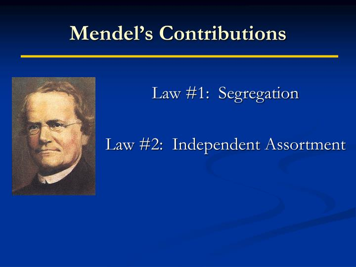 Mendel's Contributions