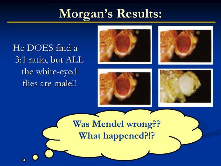 Morgan's Results: