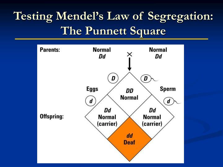 Testing Mendel's Law of Segregation: