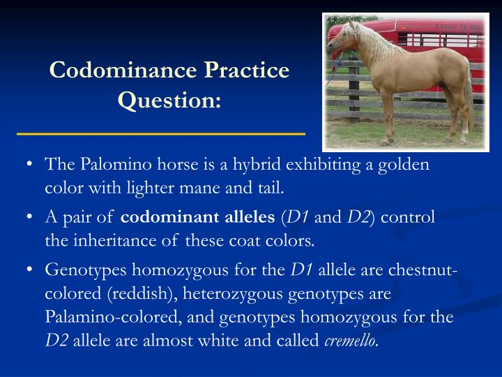 Codominance Practice Question: