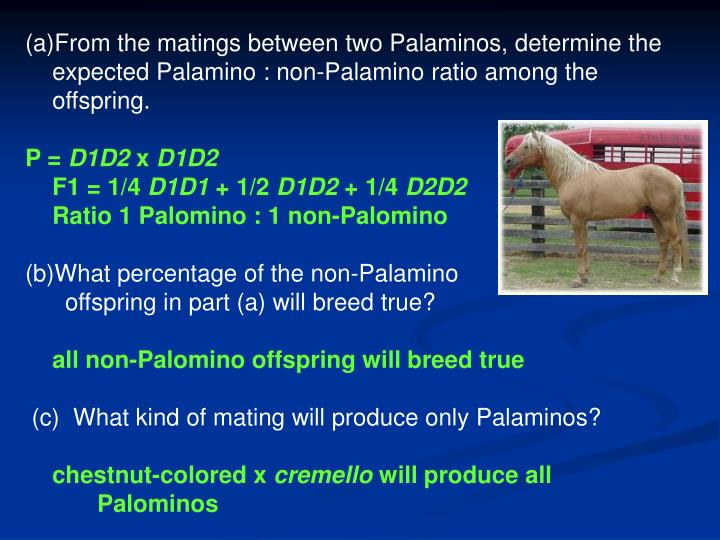From the matings between two Palaminos, determine the expected Palamino : non-Palamino ratio among the offspring.