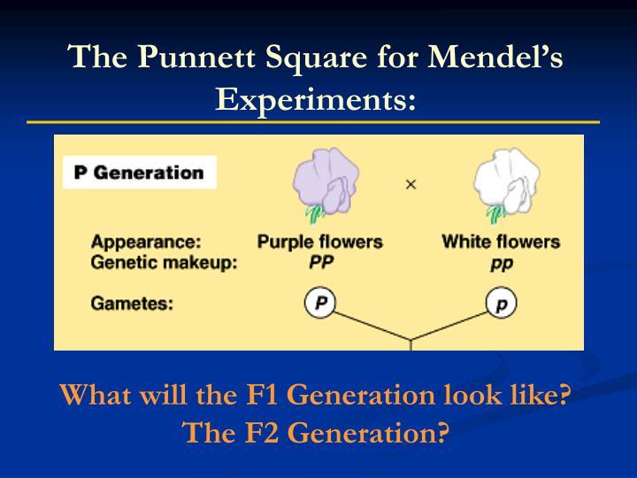 The Punnett Square for Mendel's Experiments: