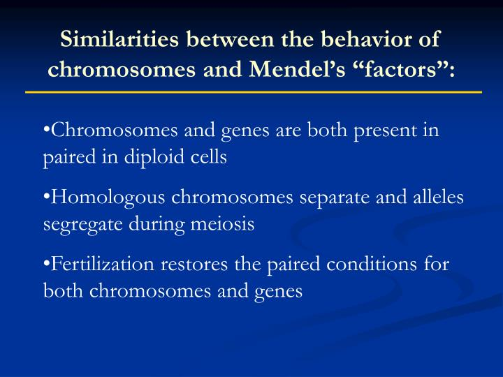 "Similarities between the behavior of chromosomes and Mendel's ""factors"":"