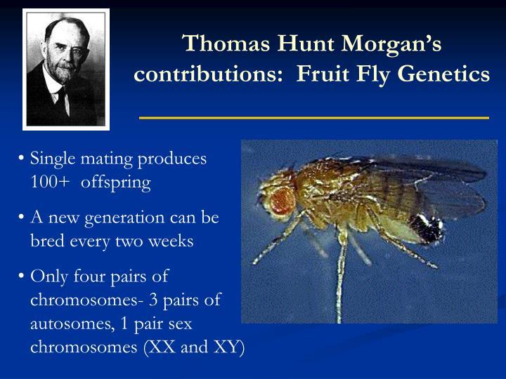 Thomas Hunt Morgan's contributions:  Fruit Fly Genetics