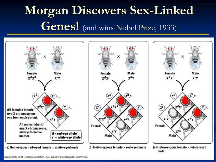 Morgan Discovers Sex-Linked Genes!