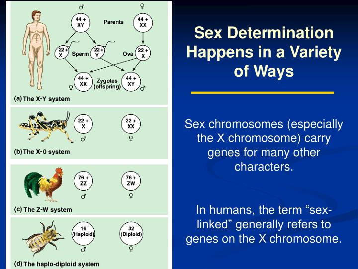 Sex Determination Happens in a Variety of Ways