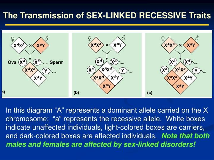 The Transmission of SEX-LINKED RECESSIVE Traits