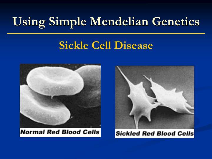 Using Simple Mendelian Genetics