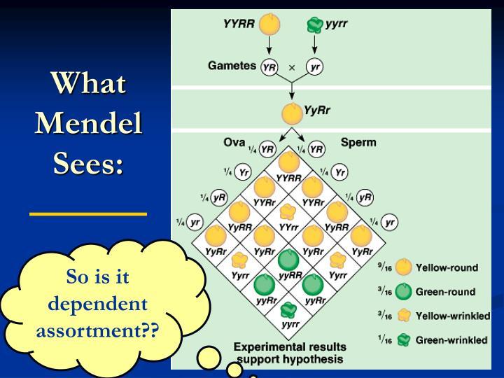 What Mendel Sees: