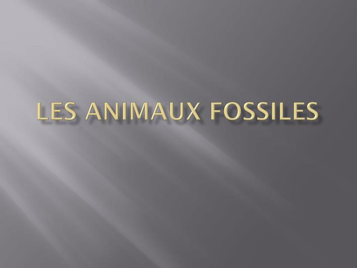 Les animaux fossiles