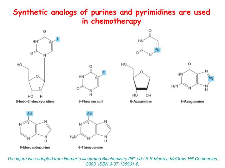 Synthetic analogs of purines and pyrimidines are used