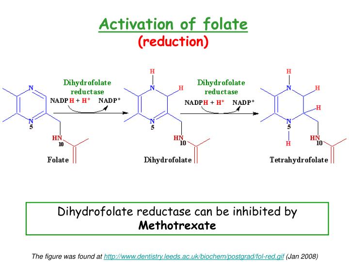 Activation of folate
