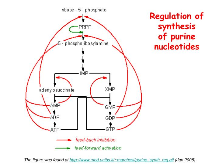 Regulation of synthesis