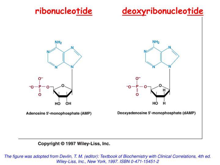 ribonucleo
